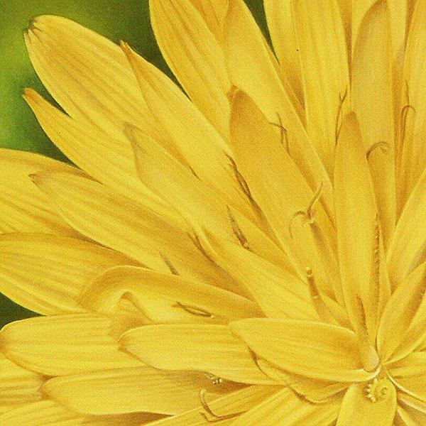 Cinzia Mauri - Spontanea - Il sole che verrà