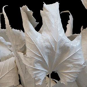 Cinzia Mauri - arte - Fragile